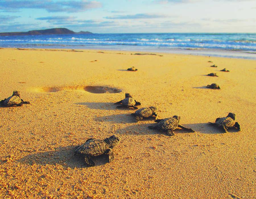 isla de boavista avistamiento tortugas responsabilidad