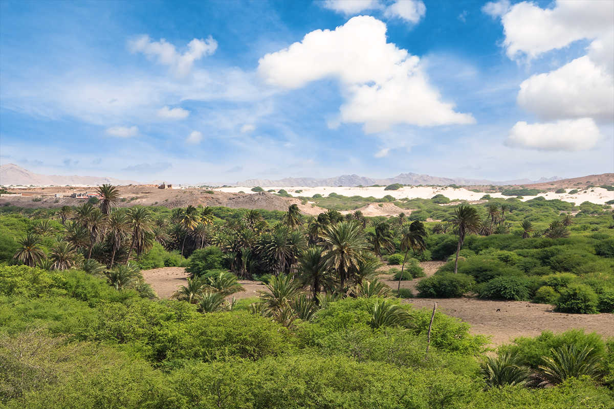 isla de boavista oasis viana foto