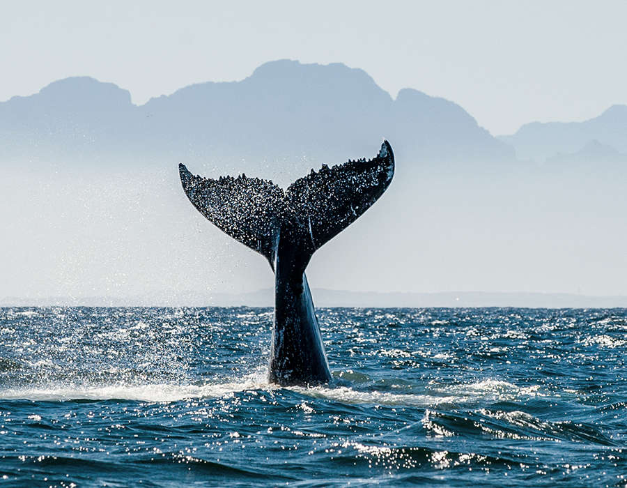 viajes a cabo verde avistamiento ballenas cola