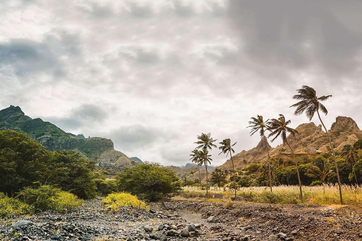 isla de santo antao palmeras viento
