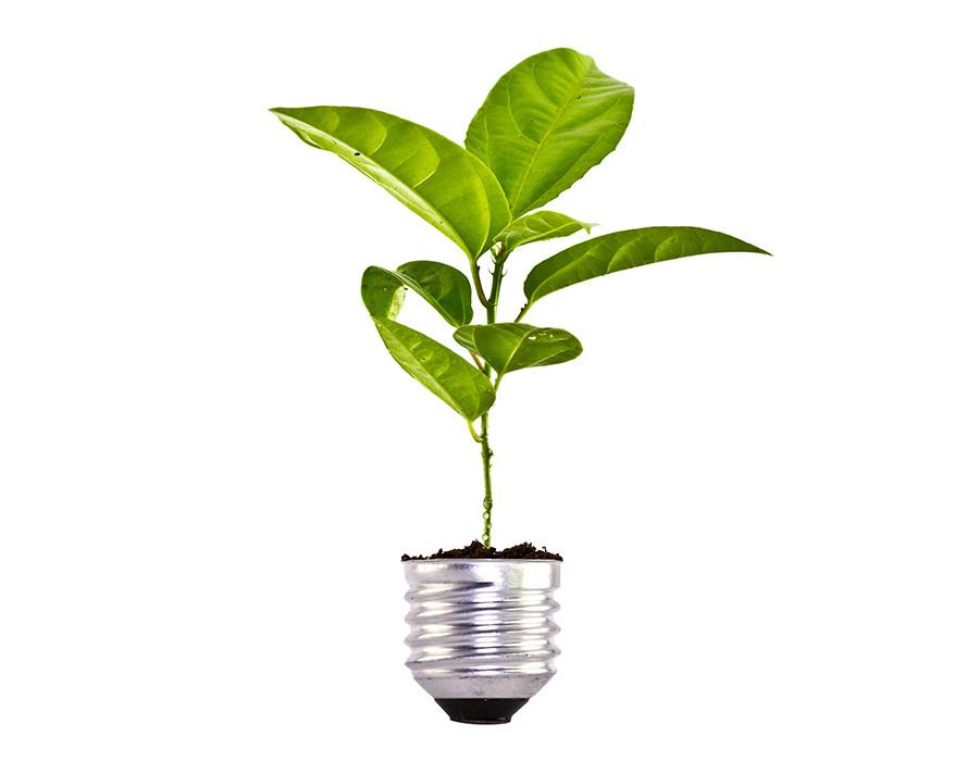 energias renovables cabo verde bombilla verde